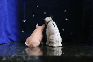 """""""Stargazers Stage""""by Terry Rafferty"""